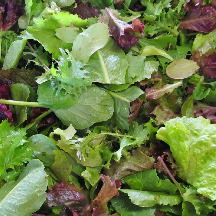 Lettuce Salad Mix 120gm Punnet
