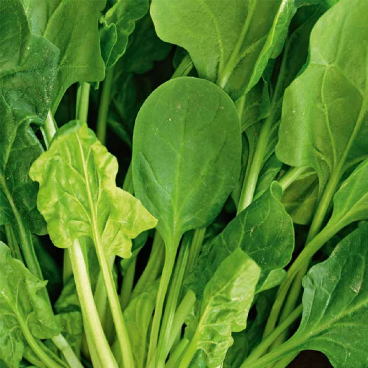 Spinach English Bunch