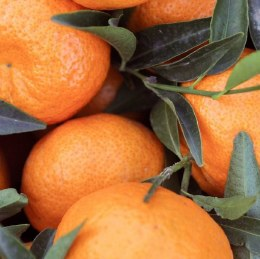 Mandarin Avana Kilo Buy 1kg