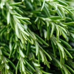 Herb Rosemary Bunch