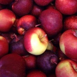 Apples Tassie Snow 500gm