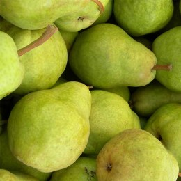 Pears Packham 500gm