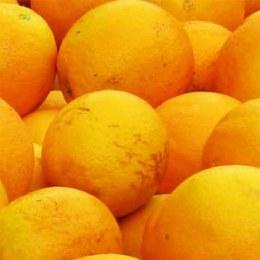 Orange Juicing Valencia Kilo Buy 1kg