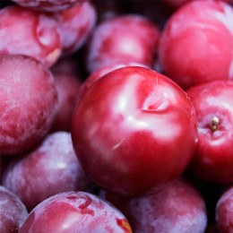 Plums  Early Queen 500gm