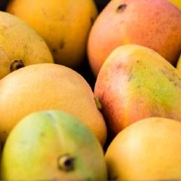 Mango Kensington Pride Each