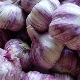 Spice Garlic Purple/White 100gm