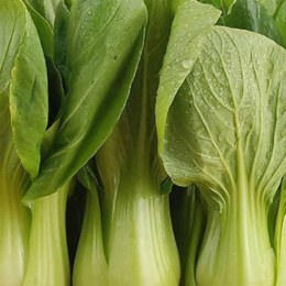 Chinese Greens Pak Choi Bunch
