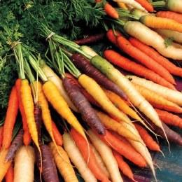 Carrots Heirloom Bunch