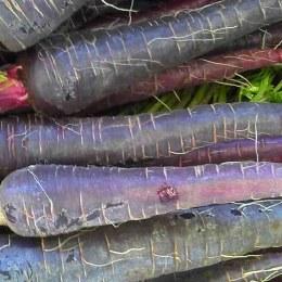Carrots Purple 500gm