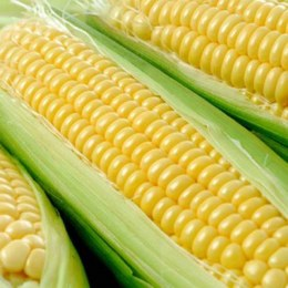 Corn Sweet 2 Cobs