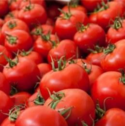 Tomatoes Round 500gm