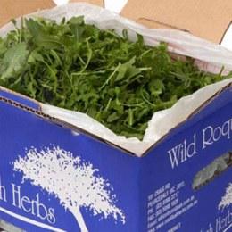 Lettuce Rocket Bulk 1.5kg