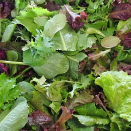 Lettuce Salad Mix 120gm Punnet
