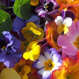 Edible Flowers 10gm Punnet