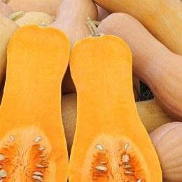 Pumpkin Butternut 500gm