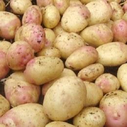 Potatoes King Edward 500gm
