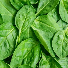 Spinach Baby 120gm Punnet