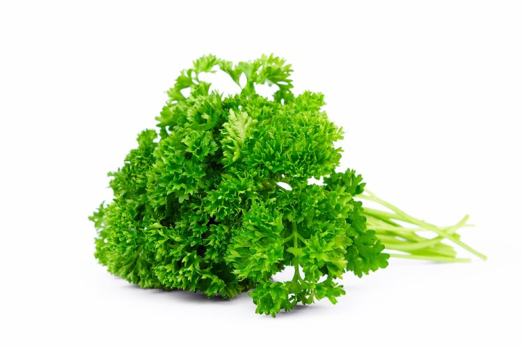 Herb Parsley Curly Bunch