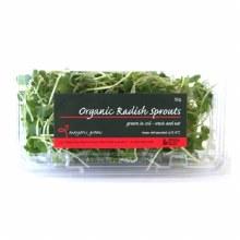 Radish Sprouts 50G