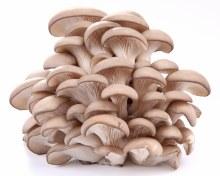 Mushroom Oyster 100g Punnet
