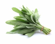 Herb Sage Bunch