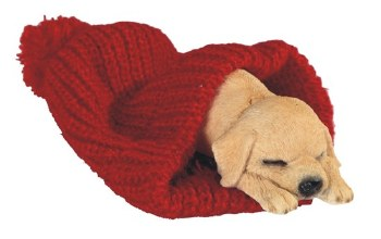 Dog Sleeping in Red Woven Blan