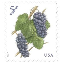 5 Cent Grapes Stamp