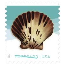 Seashell Postcard ForeverStamp