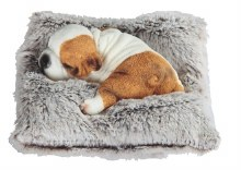 Dog Sleeping on Gray Pillow