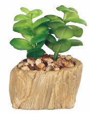 "Cactus - Woodlike 4.5h"""