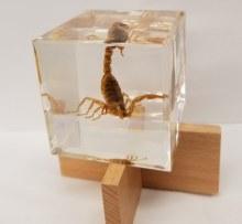 Scorpion Square Desk Decor
