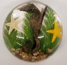 Seahorse Paperweights