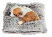 Bicolor Sleeping Dog