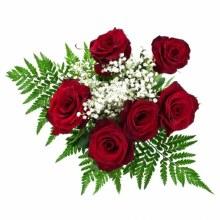 1/2 Dozen Premium Roses