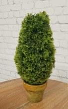 "11"" Cedar Trimmed Cone Topiary"