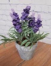 "8"" Potted Lavender"