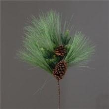 Branch White Pine Fir Cones