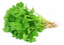 Herb Coriander Bunch