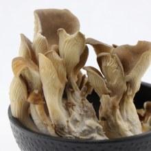 Oyster Mushrooms  3 oz box