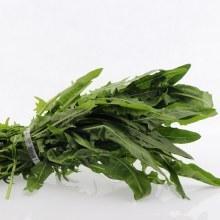 Green Dandelion  1 bunch