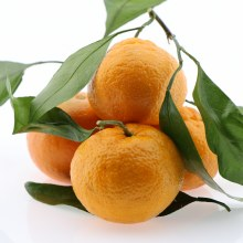 Sweet Tangerines 1 lb