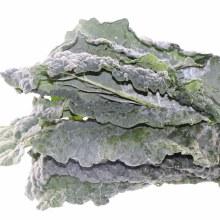 Lacinato Black Kale