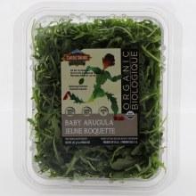 Organic Baby Arugala