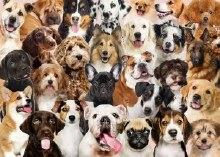 Jigsaw Puzzle All The Dogs