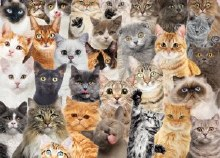 Jigsaw Puzzle All The Cats