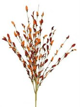 Calyx Orange Bush
