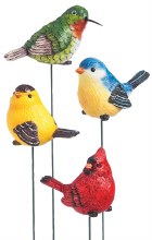 For the Birds, Plant Pick
