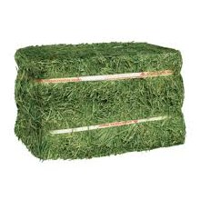 Timothy Hay Full Bale 100-110 lbs.