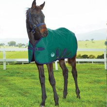 Foal/Pony Midweight Blanket 39