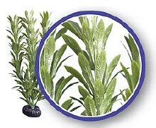"Weco Anacharis Plant 6"""